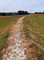 Art earthwork landscape sculpture Woodland Trust Theydon Bois Essex 11.JPG