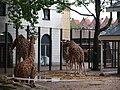 Artis Zoo, Amsterdam (7621077428).jpg