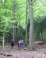 Ascending the Lower Nut Hurst ridge, Sutton Park - geograph.org.uk - 1859619.jpg