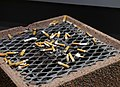 Ashtray with cigarette butts 20181223.jpg
