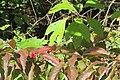 Autumn 19-10-04 129.jpg