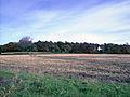 Autumn 2 (3009694961).jpg