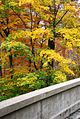 Autumn Foliage in Natirar, New Jersey File 4.jpg