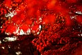 Autumn In Japan (237284599).jpeg