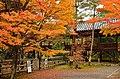 Autumn foliage 2012 (8253662132).jpg