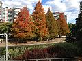 Autumn in Roma Street Parkland 052013 509.jpg