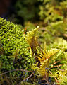 Autumn light - moss (2060669966).jpg