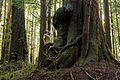 Avatar Grove Douglas-fir and Redcedar.jpg