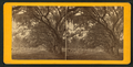 Avenue in Bonaventure, from Robert N. Dennis collection of stereoscopic views 2.png