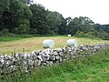 Bales in a field near Din Lligwy - geograph.org.uk - 952746.jpg
