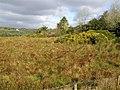 Ballygowan Townland - geograph.org.uk - 713312.jpg