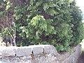 Bangor, UK - panoramio (266).jpg