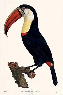 Jacques Barraband Ornithological illustrator
