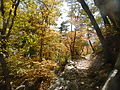 Bear Canyon Trail.JPG