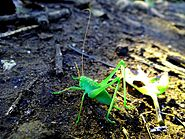 Beatutiful grasshopper