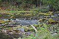 Beaver ponds Kananaskis Alberta Canada (26589267853).jpg