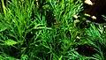 Bee between the green.jpg