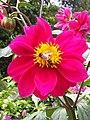 Bee in Pink.jpg
