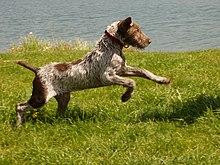 Dog Training Platform