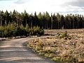 Bennachie Forest - geograph.org.uk - 447339.jpg