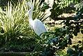Beto Carrero Zoo - panoramio (15).jpg