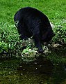 Black-bear-water-pond - West Virginia - ForestWander.jpg