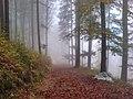 Black Forest (near Elztal) 3 (38460676930).jpg