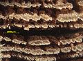 Blaettlingsbefall-an-querschnitt-fensterprofil-5.jpg