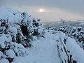 Blaikie's Hill in winter - geograph.org.uk - 649312.jpg