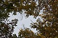 Blendon Woods-Up Through the Beech Maple 1.jpg