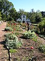 Bodnant Garden border - geograph.org.uk - 518942.jpg
