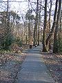 Bois des Roches 2010 YF 8007.JPG