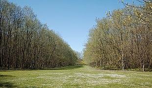 Bondues parc vert bois prairie.jpg