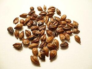 Barley tea - Image: Boricha