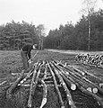 Bosbewerking, arbeiders, boomstammen, werkzaamheden, gereedschappen, motorzagen, Bestanddeelnr 253-5981.jpg