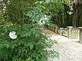 BotanicGardensPisa (15).JPG