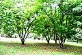 Botanic garden limbe62.jpg