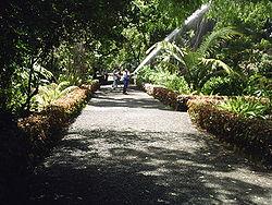 Tenerife wikipedia - Botanical garden puerto de la cruz ...