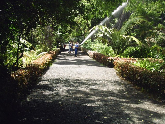 Botanico 2005