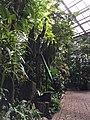 Botanische tuinen Utrecht 41.jpg