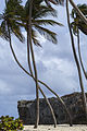 Bottom Bay Coconut trees.jpg