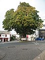 Bowness in October - geograph.org.uk - 261398.jpg