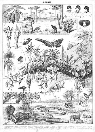 Mestiço - An image describing Brazil, at the end of the 19th century, by Nouveau Larousse illustré, in France: Indians, mestiços, examples of the fauna and flora of the country