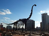 Brachiosaurus altithorax fmnh outside1.jpg