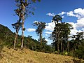 Brasil Rural - panoramio (20).jpg