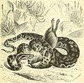 Brehms Tierleben; allgemeine kunde des thierreichs. Mit 1910 abbildungen im text, 11 karten und 180 tafeln in farbendruck und holzschnitt. (1893) (20387260756).jpg