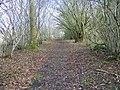 Bridleway, Chilmark Common - geograph.org.uk - 1704241.jpg