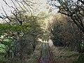 Bridleway east of Hackford Farm - geograph.org.uk - 1594358.jpg
