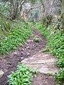 Bridleway near Hennock - geograph.org.uk - 151523.jpg