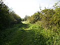 Bridleway to Lingholm Farm - geograph.org.uk - 558048.jpg